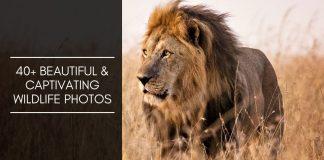 40+ wildlife photos