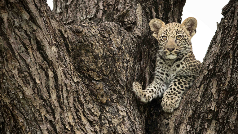Beautiful & Captivating Wildlife Photos